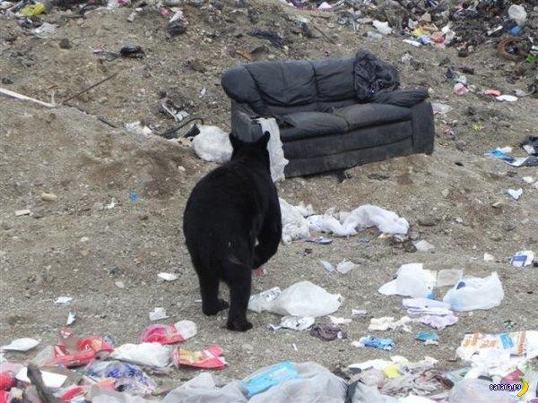 Что сделает медведь с диваном?