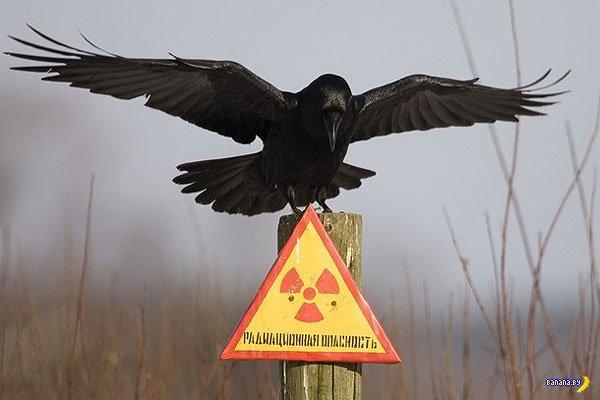 Google купит Чернобыльскую зону отчуждения за 19 млрд долларов