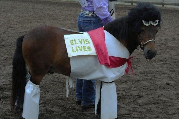 Как не повезло лошадям