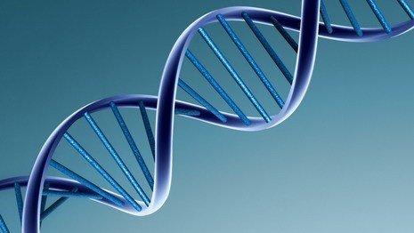 Белорусы смогут получать генетические паспорта