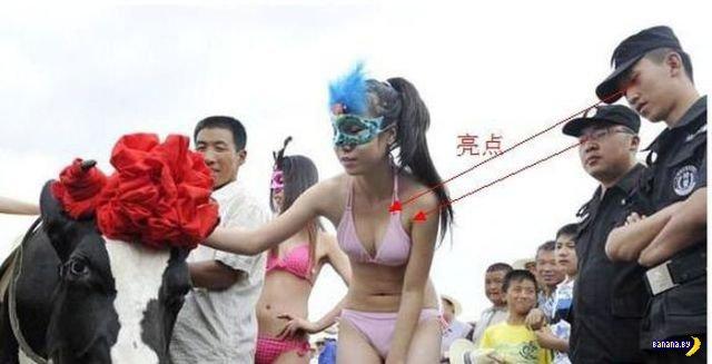 Конкурс красоты среди коров в Китае