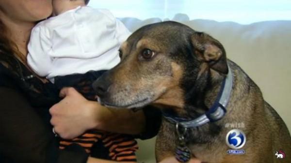 Пёс спас жизнь девятинедельной малышке