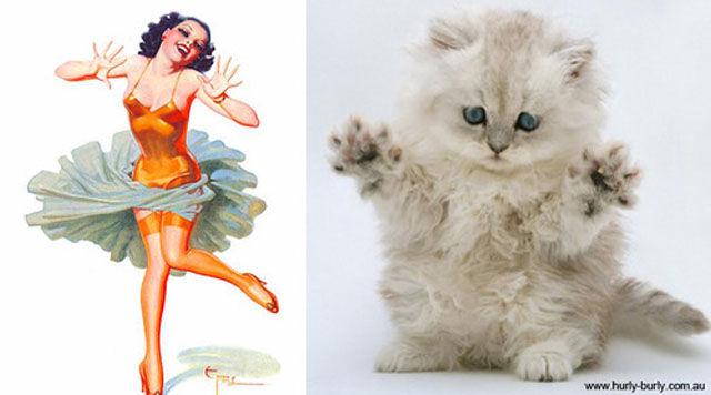 Всё, что может девушка, кот сможет лучше!