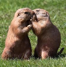 5 невероятных способов общения животных