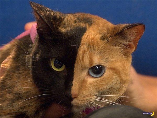 Кошка-химера