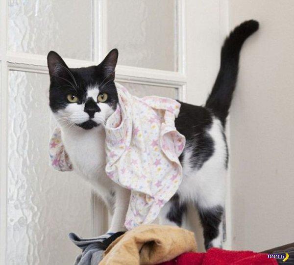 Кот-добытчик