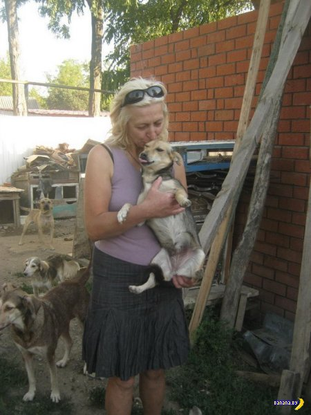 Добрый человек и его приют для животных
