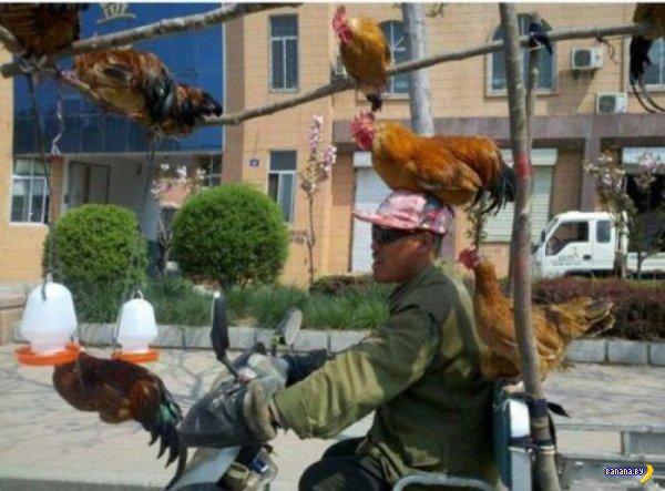 Правильная перевозка кур