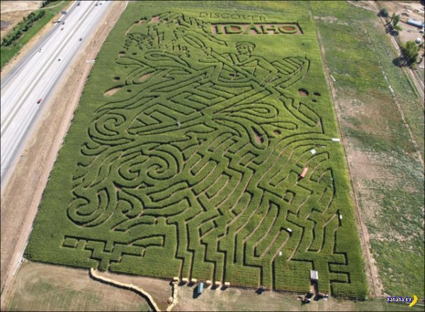 Лабиринты на кукурузных полях
