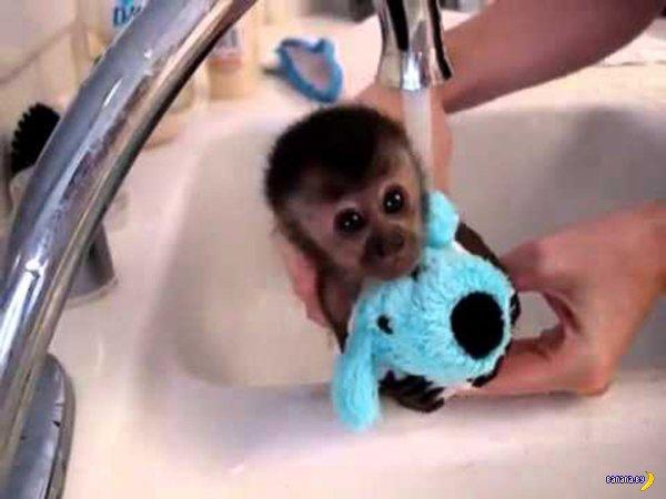 30 величайших моментов в истории мытья животных