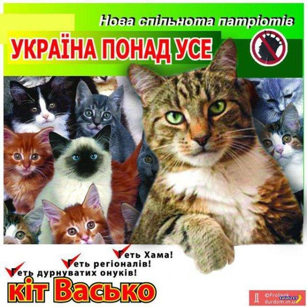 Котики и выборы на Украине