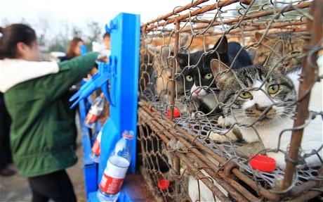 Полиция Китая спасла 500 кошек от попадания в кастрюлю