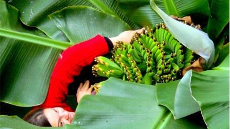 Белорусы стали выращивать бананы