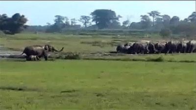 50 пьяных слонов разрушили деревню в Индии