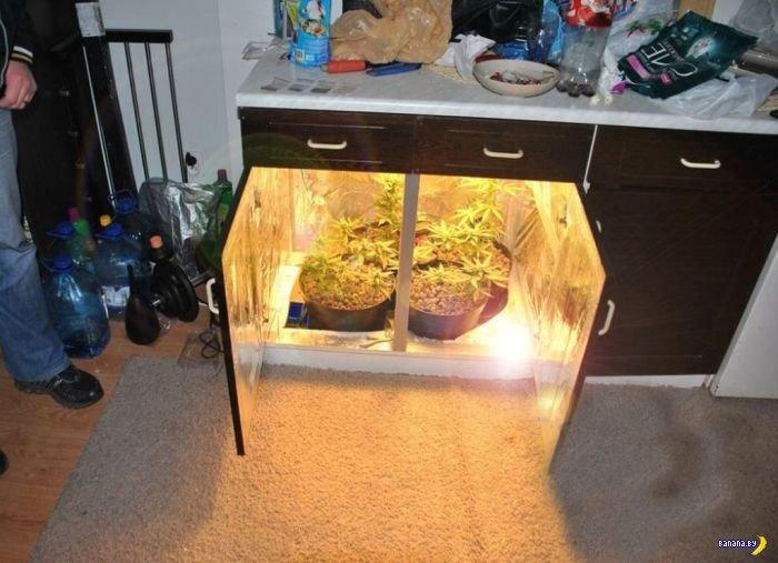 Шкаф для выращивания канабиса 50