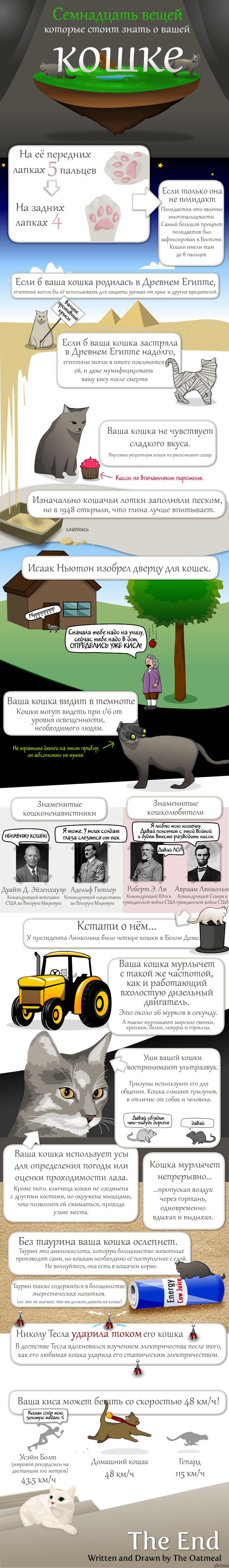 Семнадцать фактов, которые стоит знать о вашей кошке