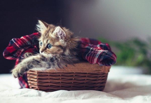 Котенок Дейзи