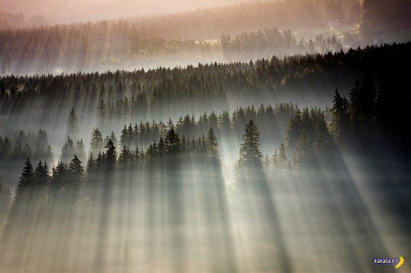 Лес и туман на фото