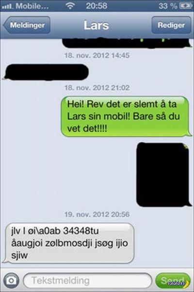 Лисица украла у парней iPhone и послала им злую СМСку!