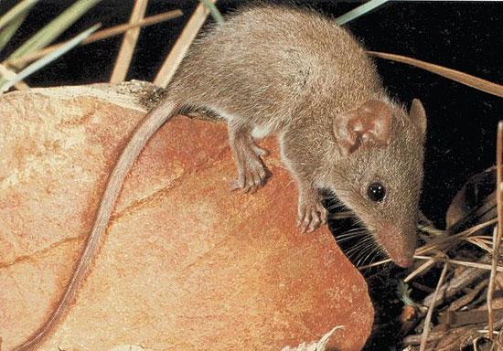 Десять видов животных со странным сексуальным поведением