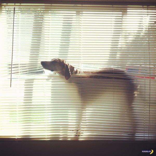 Самый спокойный пес в мире