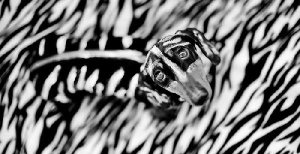 Жил-был пёс