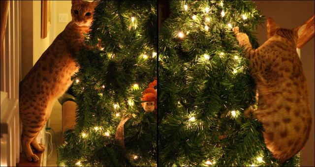 Коты vs Ёлки