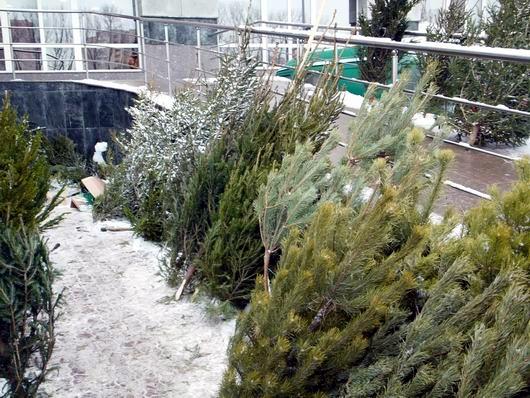 В Минске елочные базары откроются 22 декабря