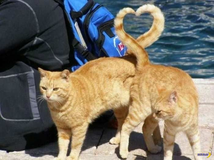 Смачные фото котов!