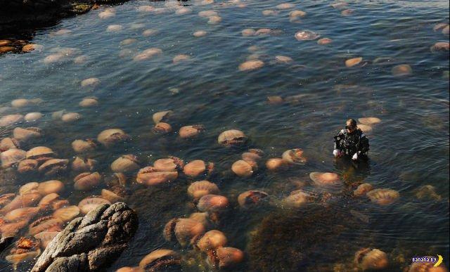 Атака медуз-гигантов на Японию