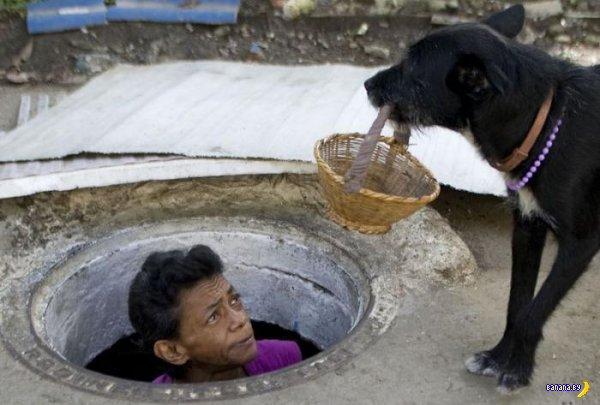 Дом в канализации