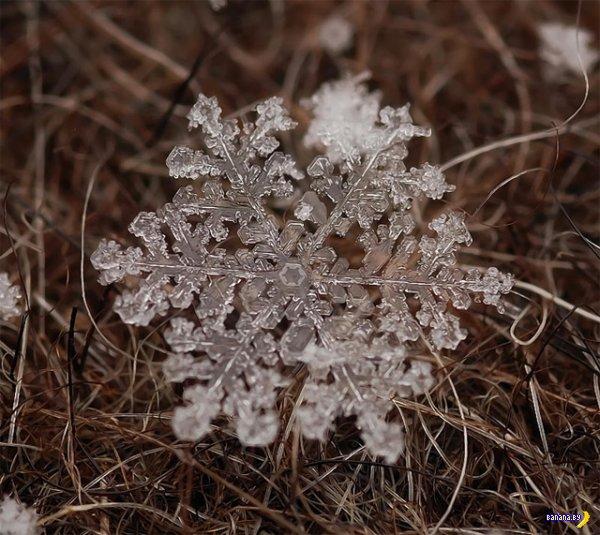 Снежинки и иней на макрофото