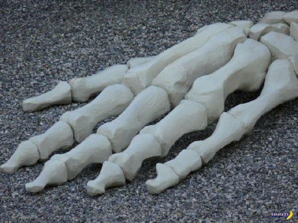 Calamita Cosmica - скелет гиганта