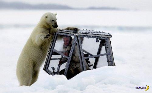 Клетка и белый медведь