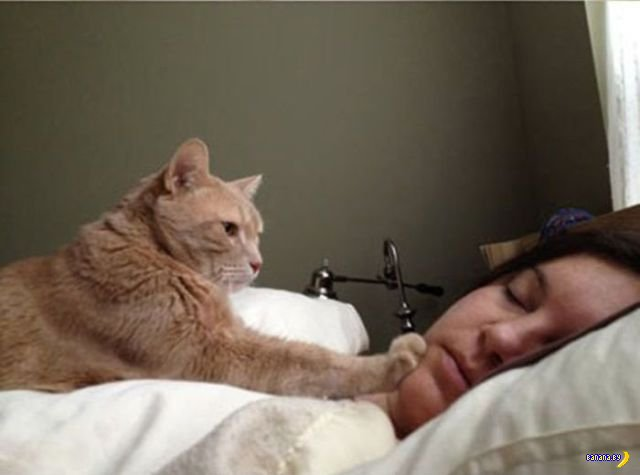 Пособие для кота-будильника