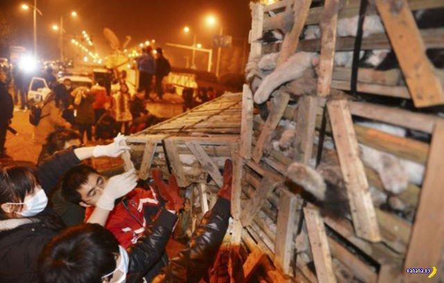 Авария спасла сотни котов в Китае