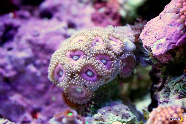 Макро фотографии кораллов