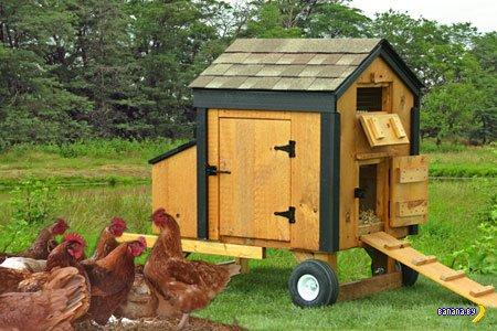 Домашнее птицеводство - новая забава в США