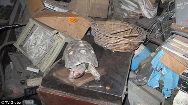 Забытая на 30 лет в чулане черепаха выжила без еды