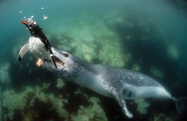 Подводная драма