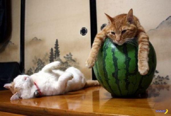 Животный мир - 2: как спят коты?