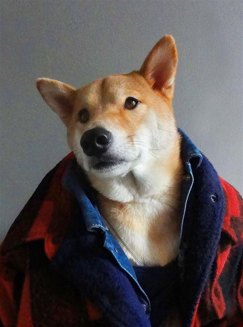 Модный пес