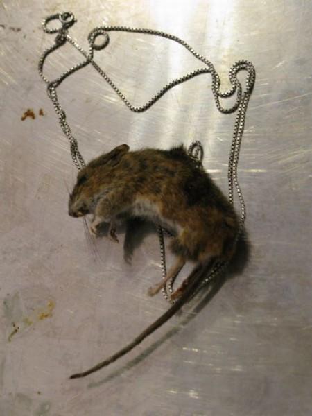 Модные аксессуары из крыс