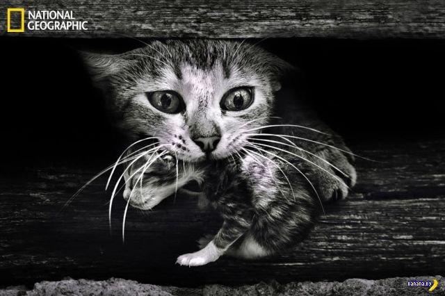 Животный мир - 13