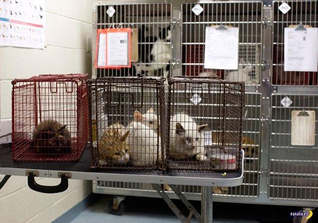 Как убивают животных в приютах США