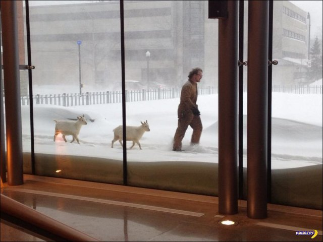 США засыпало снегом