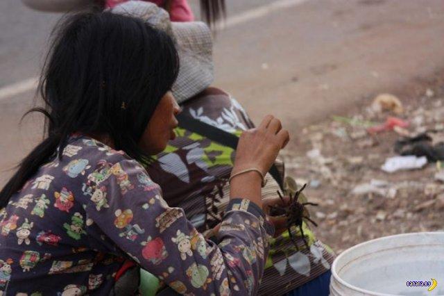 Жареные камбоджийские пауки