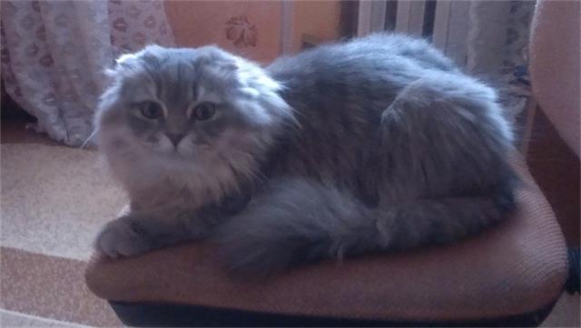 Сегодня международный день котов и кошек! +16!