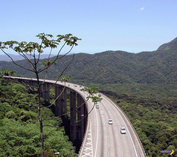 Дорога над верхушками деревьев