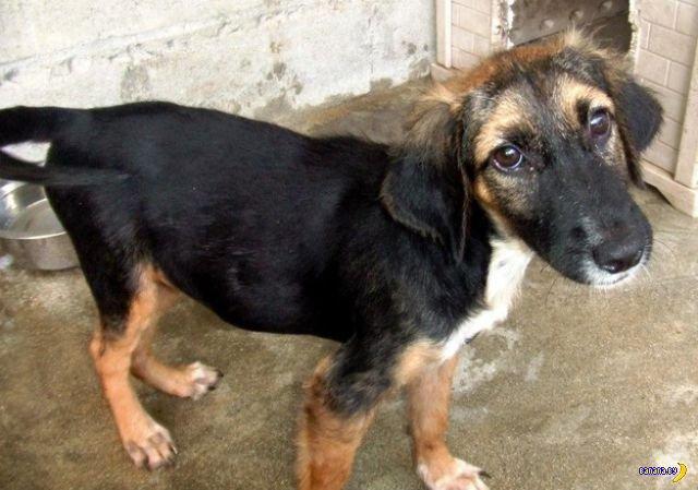 Спасение бездомных собак